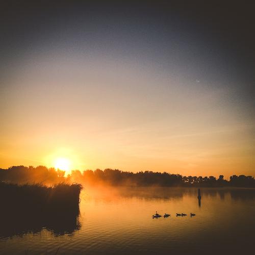 Sunrise eenden