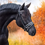 Kijk mee in Photoshop #2: Paardenshoot in de herfst