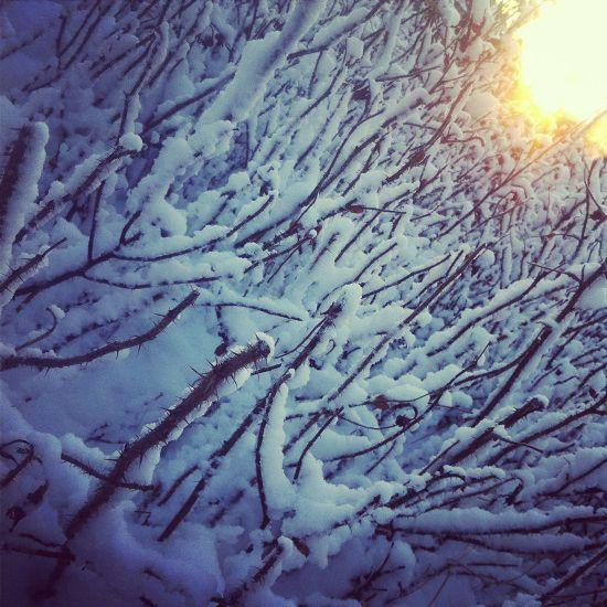 Sneeuw doorns