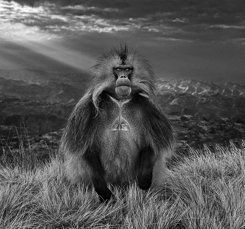 David yarrow members only simien mountains ethiopia