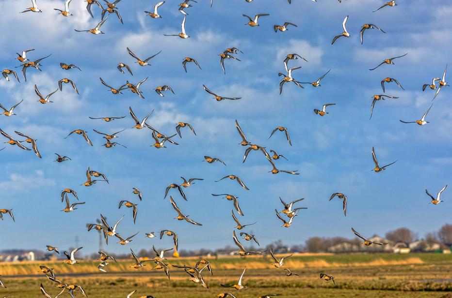 Eemnes weidevogelgebied wim van de meerendonk