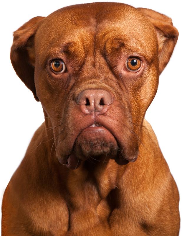 Genoeg 10 tips voor het fotograferen van honden - Photofacts &ZF35