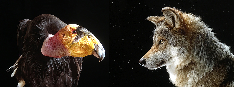 Joel Sartore - Photo Arc