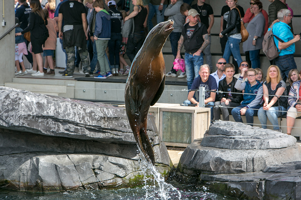 Wildlands zeehondenshow