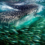 21 verbluffende National Geographic contest-foto's