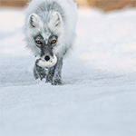 National Geographic - The Art of Wildlife Photography